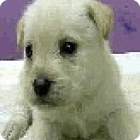 Adopt A Pet :: Vail-ADOPTION PENDING - Boulder, CO