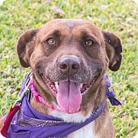 Adopt A Pet :: Gypsy - Wharton, TX