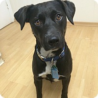 Adopt A Pet :: Rigsby in CT - Manchester, CT