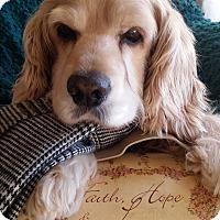 Adopt A Pet :: Baxter - Santa Barbara, CA