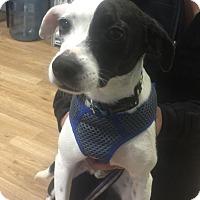 Adopt A Pet :: Mather - San Francisco, CA