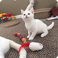Adopt A Pet :: Angel - Millersville, MD