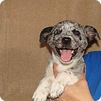 Adopt A Pet :: Viva - Oviedo, FL