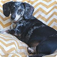 Adopt A Pet :: Truman - Woonsocket, RI