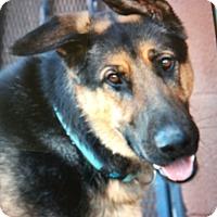 Adopt A Pet :: DIESEL VON DIEZ - Los Angeles, CA