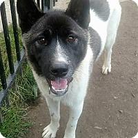Adopt A Pet :: Suki - Bruce Township, MI