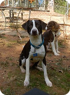 Border Collie Mix Dog for adoption in North Wilkesboro, North Carolina - Rafiki