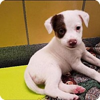 Adopt A Pet :: Cher - Frisco, TX