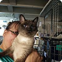 Adopt A Pet :: Sayres - Avon, OH