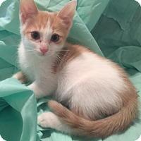 Adopt A Pet :: QUINOA - Dallas, TX