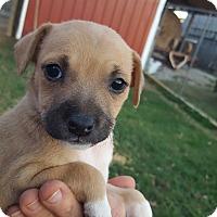 Adopt A Pet :: Breezy - Glastonbury, CT