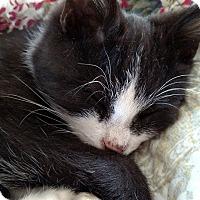 Adopt A Pet :: Pip - Evans, WV