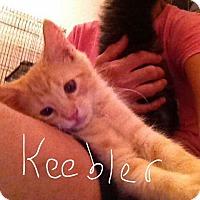 Adopt A Pet :: Keebler - Wichita Falls, TX