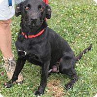 Adopt A Pet :: Ryder - Lacon, IL