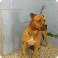Adopt A Pet :: A500478 - San Bernardino, CA