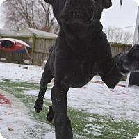 Adopt A Pet :: Lloyd - Mechanicsburg, PA