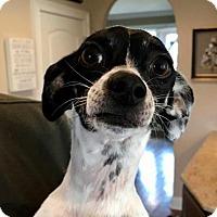 Adopt A Pet :: TY - Washington, DC