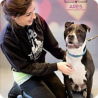 Terrier (Unknown Type, Medium) Mix Dog for adoption in Hyde Park, New York - Ares