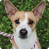 Adopt A Pet :: PRINCESS - Red Bluff, CA