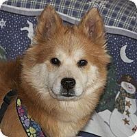 Adopt A Pet :: EVE - Dix Hills, NY