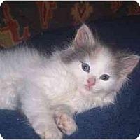 Adopt A Pet :: Mylie - Irvine, CA
