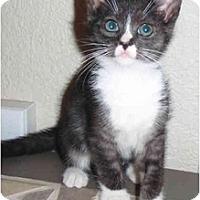 Adopt A Pet :: Meow Meow - Modesto, CA