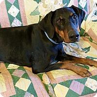 Adopt A Pet :: Molly--pending - New Richmond, OH