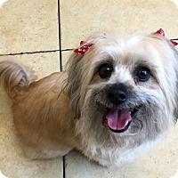 Adopt A Pet :: LYRIC - Los Angeles, CA