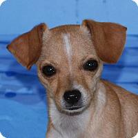Adopt A Pet :: Sally Le Roy - San Francisco, CA