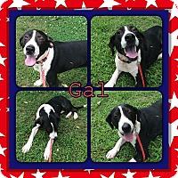 Adopt A Pet :: Gal- pending adoption - East Hartford, CT