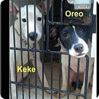 Adopt A Pet :: Keke - Northfield, NJ