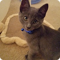 Adopt A Pet :: Merlin - Turnersville, NJ