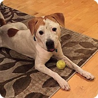 Adopt A Pet :: Colby - Ft. Lauderdale, FL