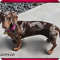Adopt A Pet :: Camie - Louisville, CO