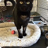 Adopt A Pet :: Katana - Alpharetta, GA