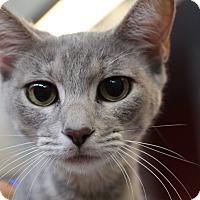 Adopt A Pet :: Dolley - Sarasota, FL