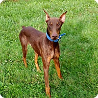 Adopt A Pet :: Murphy - New Richmond, OH