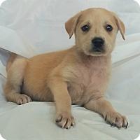 Adopt A Pet :: Daisy - Mooresville, NC