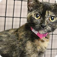 Adopt A Pet :: Diana - Medina, OH