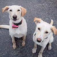 Adopt A Pet :: Bill and Ted - St. Louis, MO