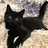 Adopt A Pet :: Veronica - Toronto, ON