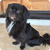 Adopt A Pet :: Black Jack - Encino, CA