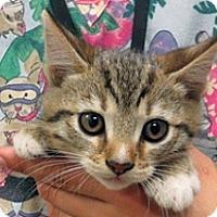 Adopt A Pet :: Boomer - Wildomar, CA