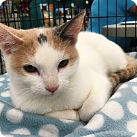 Adopt A Pet :: Eve - Riverside, CA