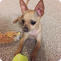 Adopt A Pet :: Paco - Sanford, FL