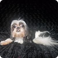 Adopt A Pet :: Peggy Turner - Urbana, OH
