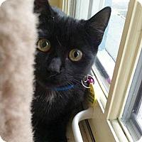 Adopt A Pet :: Rocket - Hudson, NY