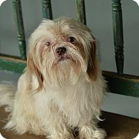 Adopt A Pet :: Sarge - San Antonio, TX