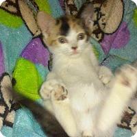 Adopt A Pet :: CHEYENNE - Hampton, VA
