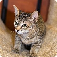 Adopt A Pet :: A..  Bonnie - Mooresville, NC